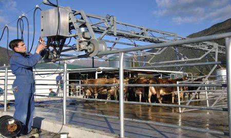 dairy apprentice stock
