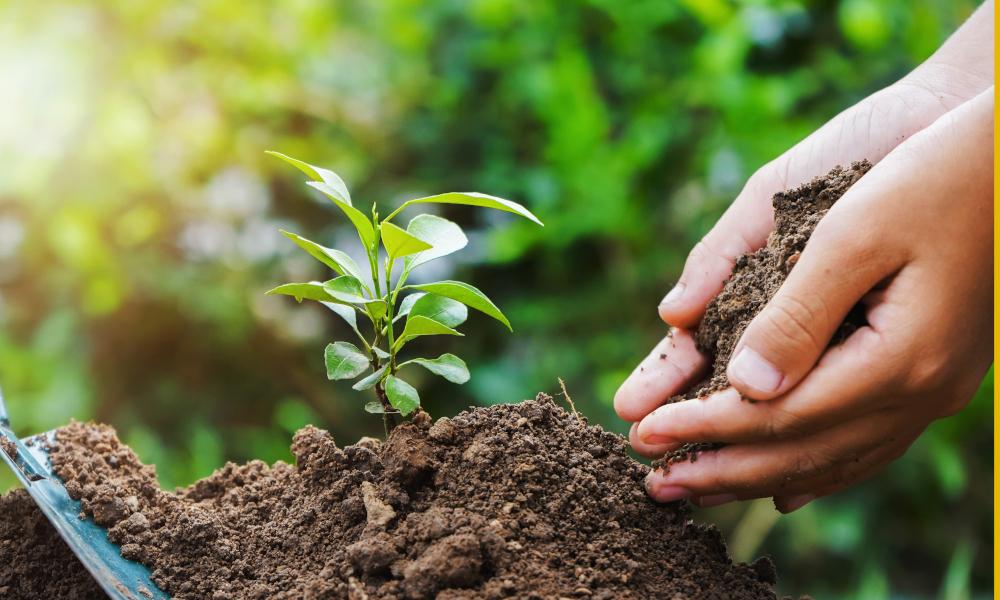 tree planting stock image