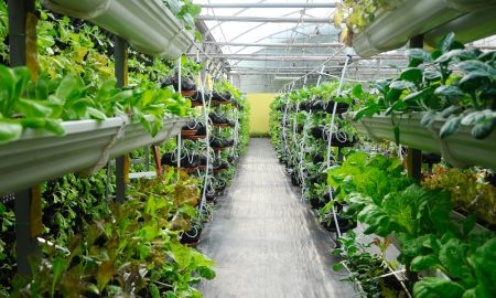 vertical farming stock image