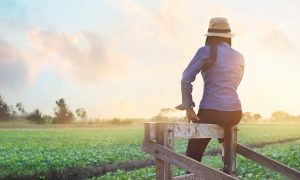 Farm Woman stock image
