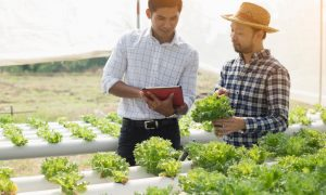agriculture farmers productivity stock image