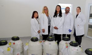 The lab team based at LIC's semen processing centre in Awahuri, Manawatu