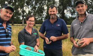 Ecan-News-story-SouthCanterbury-WinterGrazing-Event-2