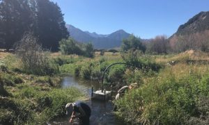 UC Master of Science student Kate Hornblow is part of a BioHeritage project that's investigating the recovery of streams and rivers. Kate collected snails from Grasmere Stream which runs through the University's Cass Research Station.