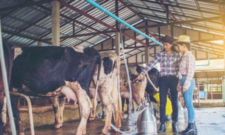 dairy education training stock image