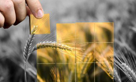 bumper arable crops