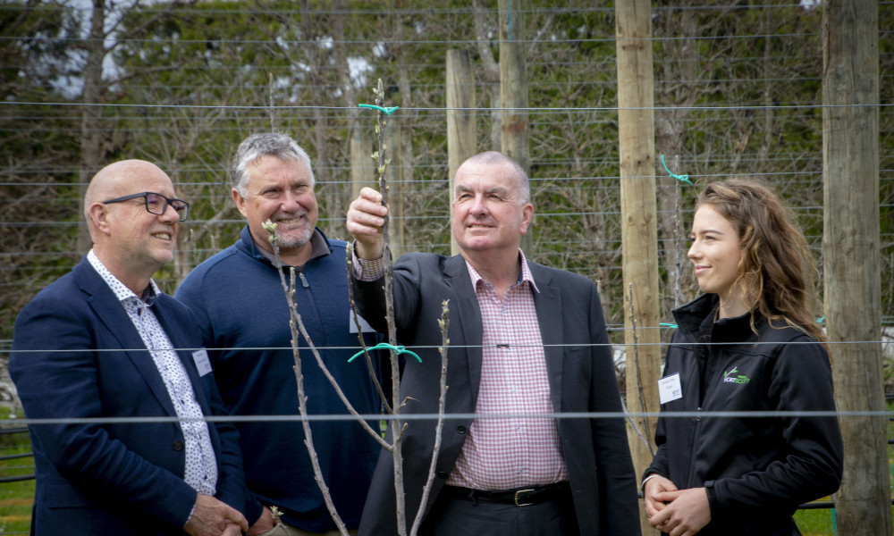 Innovation Orchard will play a key role in delivery of new Bachelor's Degree in Horticulture from left Massey University's Head of the School of Agriculture and Environment Professor Peter Kemp, New Zealand Apples & Pears capability manager Erin Simpson, and chief executive Allan Pollard and student Georgia O'Brien. Image courtesy of NZAPI