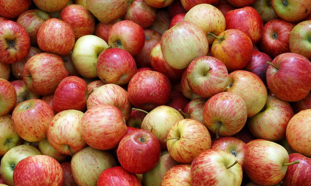 apples NZ stock image