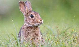 rabbit stock image