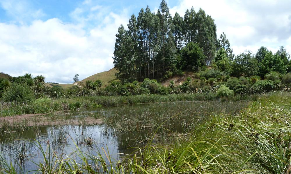wetland guidance