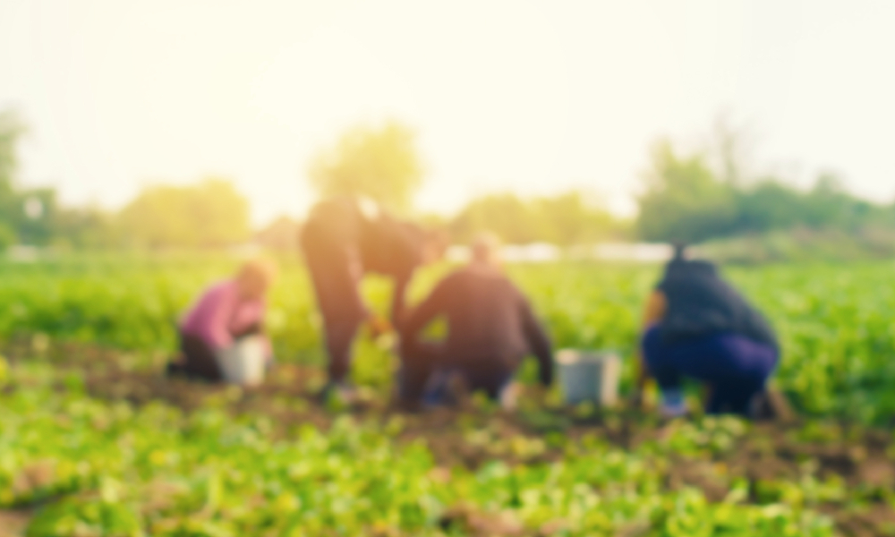 farm workers stock image