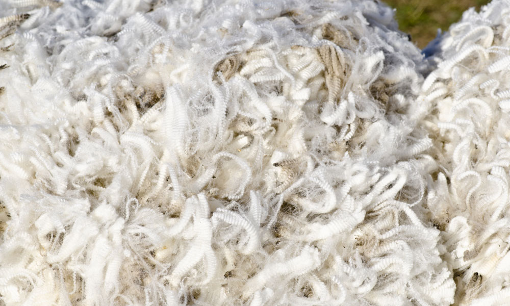 wool focus