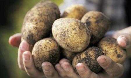 potato weeds